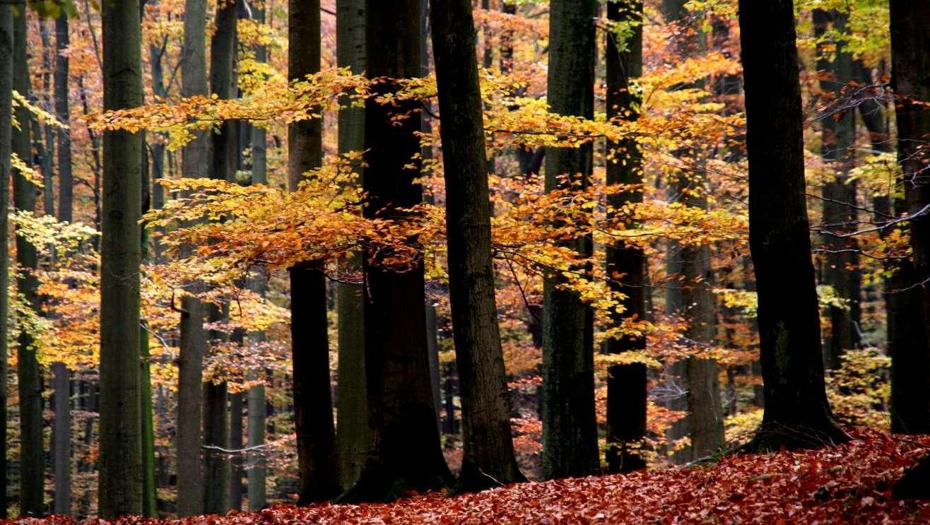 Herbstwald am Schwarzen Bach